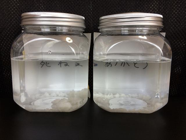 水 言葉 文字 波動 実験